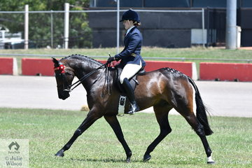 The Hayes and Newman nomination, 'Allure Park Charming' took second place in the class for Novice Heavyweight Galloway 14.2-15hh.