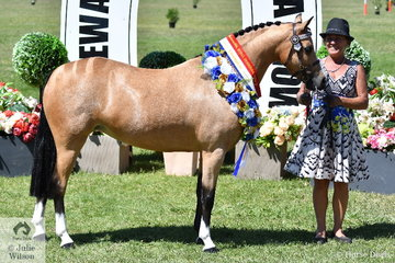 Donna Murray did the honours with her own and the Kaluda Park nomination, 'Kaluda Park Hugs And Kisses' to claim the Led Arabian Derivative Championship.