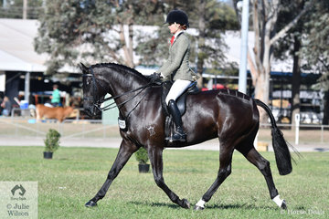 Ebonie Lee rode the Lee Family's, 'PPH Zena' to win the class for Open Show Hunter 15-15.2hh.