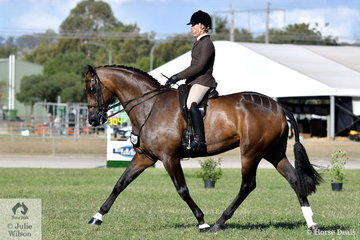 Adam Oliver rode Rebecca Crane's, 'Federer' to win the  class for Gent's Show Hunter and go on to take out the Show Hunter Horse Reserve Championship.