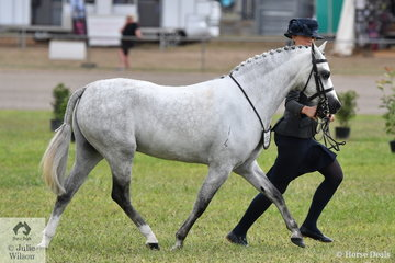 Mikayla Vankampen, dressed in her Sunday best, led her own, Paul Austin and Mark Lilley's nomination, 'Bellgarra Royal Blue' to win the class for Led Show Hunter Pony N.E 12.2hh.