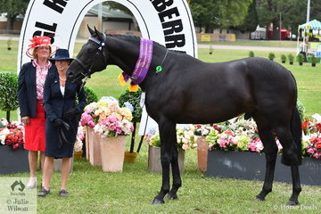 Leanne Jones claimed the Supreme Led ANSA award with her impressive stallion, 'Fifth Avenue'. Leanne is pictured with ANSA judge, Joanne Maunder.