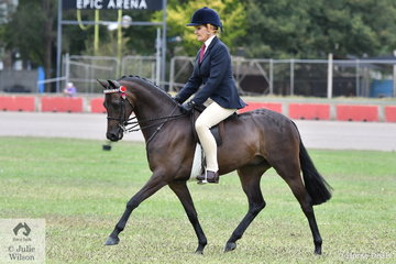 Kerry Dunstan rode her own and Paul Dunstan's beautiful home bred, 'Malibu Park Tip Top' (Llanarth Top Cat imp/MP Sorrento) to win the class for Novice Pony 13-13.2hh and go on to claim the Best Novice Large Pony award.
