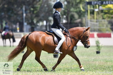 Irene and Narelle Hogg's gelding, 'Lentara Admiral' worked a treat for Emma Hutchinson and was declared 2019 ACTewAGL Royal Canberra Show Best Ridden Shetland Exhibit.