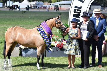 Donna Murray is having a great show with her own and the Kaluda Park nomination, 'Kaluda Park Hugs And Kisses' that today was declared Supreme Champion Part Bred APSB Riding Pony. Donna is pictured L-R with award sponsor, Jacqui Langfield and judge, Simon Durante.