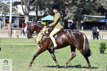 The Argyl Stud's 'Argyl Diamond' had a super day at the 2019 ACTewAGL Royal Canberra Show. This morning the mare was declared Champion Led Show Hunter Pony and this afternoon, with Charlie Hunt in the saddle, was declared Champion Ridden Large Show Hunter Pony.