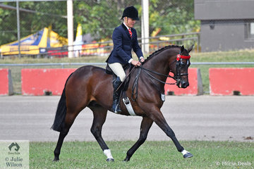 Michael Christie rode Sandra McCann and Joh Bailey's beautiful and super successful, 'Mikimoto' to win the class for Open Hack 15.2-16hh.