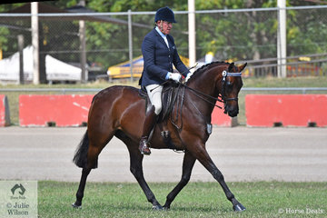 Successful show and dressage rider, Mark Kiddle rode the M and M Performance horses, Pavia Family, Kay and Samsa nomination, 'TS Dante' to take second place in the class for Open Hack 15.2-16hh.