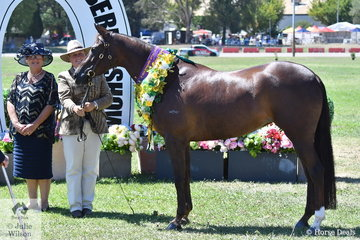 Jenny Weule claimed the Champion Mare and Supreme Champion Led Australian Stock Horse awards with her beautiful, 'Netherway Touch Of Class' (Glen Lee Rivoli Teak/Netherway Melody). Jenny is pictured with ASH judge, Sue Lind.