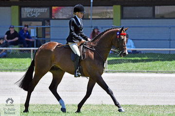 Francesca Christie rode her beautiful, 'Eye Of The Tiger' to second place in the class for Open Hack 16-16.2hh and win the Lady's hack.