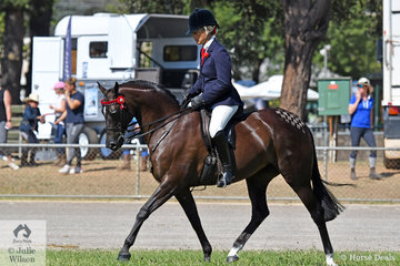 Well known and successful breeder, rider and exhibitor, Joanne Prestwidge rode her home bred, 'Royalwood Songstress' to win the class for Open Heavyweight Galloway 14-14.2hh and ridden Riding Pony 14-14.2hh.