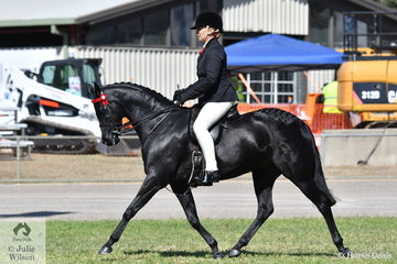 Lynda Hayes is pictured aboard her own and Vicki Pisciotta's nomination, Wideacre Black Diamond' that took second place in the class for Open Pony 13-13.2hh and 1st place in the Pony Hack Mare over 12.2 and Ridden Riding Pony 13-13.2 hh.