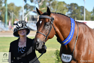 Janine Shepherdson is pictured with her own and the Harper-Purcell nomination, 'Sigmund' that won the class for Thoroughbred Gelding N/E 16hh. The 2018 Brisbane Royal Champion Led Thoroughbred Gelding went on to claim the 2019 Canberra Royal Reserve title. Later in the day, Sigmund was declared Champion Thoroughbred Under Saddle.