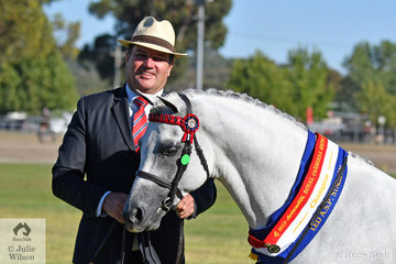Keeping a low profile on the main arena, but always busy behind the scenes, Paul Austin did the honours with the Riverglen Stud, Austin and Lilley nomination, 'Riverglen Zion' to claim the Champion Led Australian pony award.