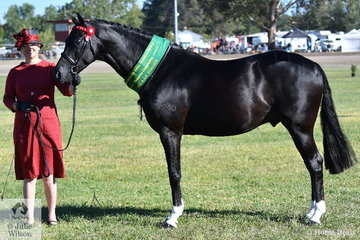Clair Osbourne took out the Australian Saddle Pony Stallion Reserve Championship with her own and Michael Osbourne's, 'Wynara Sweet Revenge'.