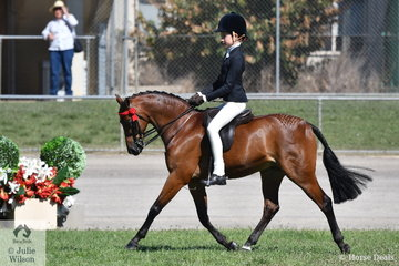 Elizabeth Taylor had a busy morning. First up the Girl Rider 11 AU 13 Years winner was working out in the Supreme Junior Rider ride off and then swapped to Marcia Beard's  Champion Ridden Riding Pony, 'Rhyl Monarque'. The Open 12-12.2hh winner took out the Reserve Champion Small Pony award.