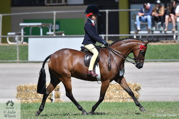 What a show. Nominated  by The Crawford Twins, 'Braeburn Park Spring Dance' was ridden by Annabelle Richardson  to claim the Best Novice Small Pony title and today she went all the way to claim the 2019 ACTewAGL Royal Canberra Show Champion Small Pony Hack award.