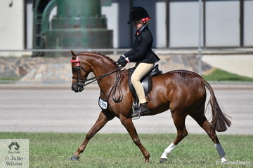 The beautiful, 'Newington Tinkerbell' ridden by Ella Manning and nominated by Margot Haynes, David Quayle and Catherine Gale took second place in the class for Pony Hack 11.2-12hh and the Pony Hack Mare N/E 12.2hh. She is pictured working beautifully as usual.