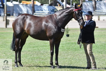 Dale Plumb, pictured with Champion Thoroughbred Mare, 'DP Gisele' was a conternder in the Best Dressed Male Strapper class.