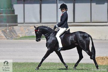 Renae Dorney's, 'Nottingham Love Song' won the class for Open Pony 13-13.2hh ans went on to be declared Champion Large Pony Hack.