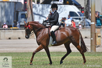 Well known and successful showing exhibitor, Briony Randle from Victoria rode the BC Show Team and Judy Ivory nomination to win the Lightweight Galloway 14.2-15hh and go on to take out the 2019 ACTew AGL Royal Canberra Show Reserve Champion Galloway award.
