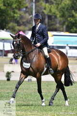 Stephen Gladstone's beautiful Gelding Showing Thoroughbred Qualities winner, 'Heartbreaker' is pictured during the 2019 ACTew AGL Royal Canberra Show Hack Championship workout.