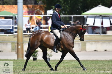Simon Deleeuw is pictured aboard the Leah Walsh and SJM Equestrian nomination, 'KP Royal Prince'. The 2018 Canberra Best Novice Hack and Reserve Champion won the class for Open Hack 15-15.2hh.