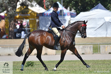 """""""If you've got it flaunt it"""" and Michael Christie and 'Mikimoto' certainly have it. Sandra McCann and Joh Bailey's superstar 15.2-16hh winner,  stood beautifully during the unsaddled examination by the judge Charlotte Scott and claimed his eleventh Royal Show Championship."""