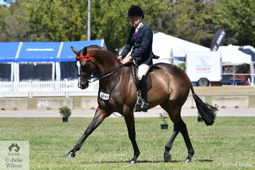 Chris Lawrie has ridden many Champions and judged many Champions and he may have kept the best for the autumn of his extraordinary showing career. Chris claimed the Best Novice Hack award with his, 'Royal' and after winning the Open 16-16.2hh class, claimed the 2019 ACTew AGL Royal Canberra Show Hack Reserve Championship.