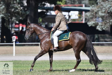 Jenny Weule claimed the Led Australian Stock Horse Championship with her, 'Netherway Touch of Class'. The mare by Glen Lee Rivoli Teak today was declared Champion Ridden ASH and Supreme Australian Stock Horse Under Saddle.