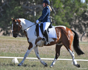 """SALT & VINEGAR"" ridden by Isobel Freeman in the EVA80 Section B Dressage Phase"