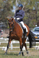 """REGAL RED JASPER"" ridden by Kirilee Hosier in the CCN 2.5 Star Dressage Phase"
