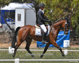 """JAYBEE VIBRANT"" ridden by Robert Palm in the CCN 2.5 Star Dressage Phase"