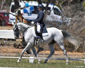 """TOWNSEND LS"" ridden by Charlotte Sheldon in the CCN 2.5 Star Dressage phase"