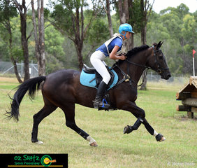Wasting no time out on the track, Jess Somerfield and Arnage Royal Exhibit gallop their way around the CCN1 Star cross country with ease at the Sydney Eventing Summer Classic.