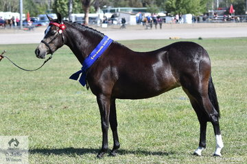Jacqui Langsfield took out the class for Buckskin Filly 3 Years and Under with her, 'Gemsfield Babushka'.