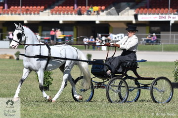 Robyn Anderson drove the Reigate Hackney Stud's, nomination Warranwood Providence in the Light Harness classes.