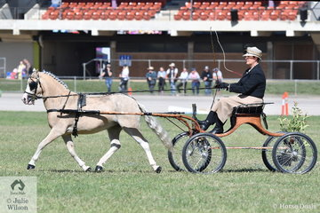 Kelsey Bullivant drove her own and Neal Shipard's nomination, 'Tarragon Park Victory' to take third place in the class for Non Hackney Pony 10.2 AU 12.2hh.