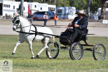 Big or small, Shane Keir can drive them. Shane is pictured at the reins of the P and S Keir, Canberra Park, Stepalong Lodge and Springfield Stud nomination, 'Canberra Park Troy' that took second place in the strong class for Non Hackney Pony 10.2 AU 12.2hh.
