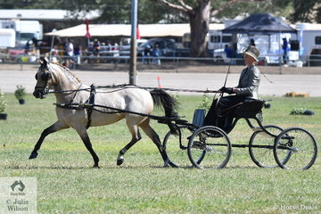 Amanda Proctor rode the Ragg and Proctor Show Team nomination, 'Glenwood Look At Me' to take second place in the class for Non Hackney Harness Pony Over 12.2 asn N.E.14hh.