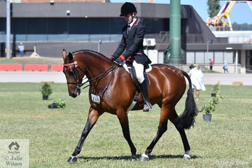 Connor Richardson rode Amanda Triandpoulos' nomination, Diamond Park Khaleesi' to second place in the class for Ridden Standardbred. Earlier the mare was declared Reserve Champion Led Standardbred Mare.