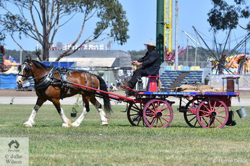 Shane Keir drove 'Canberra Park, Stepalong Lodge Toby' to win the class for Heavy Harness 4 Wheeled Business Turnout. The Keir family have been a force with which to be reckoned for many years and have over 140 beautiful horse drawn vehicles.