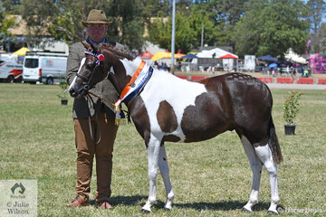 Stuart Robinson capped of a sensational 2019 ACTewAGL Royal Canberra Show by claiming the Led Pinto Gelding Championship with the Suburban Lodge Training and Show Stables and Carolyn Herbet nomination, 'Tapu Mac-Cor-Mac'.