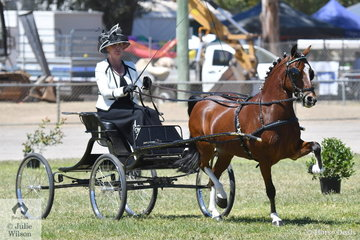 Amanda Proctor drove the Ragg and Proctor Show Team's, 'Glenwood Limited Edition' to take out the Hackney Pony Reserve Championship.