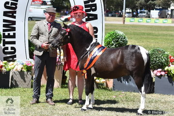 S Frecklington and Charles Dunkley's charming little stallion, 'Prada Pines All That Shazzam' was declared Supreme Led Pinto. Charles is pictured with the pony and Pinto judge, Rachael Knight.