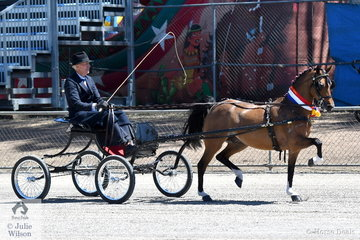 He can ride 'em and he can drive 'em. Today Chris Lawrie drove Anne Lindh and the Lawrie Group's, 'Hudson Wildcard' to claim the Hackney Pony Championship.