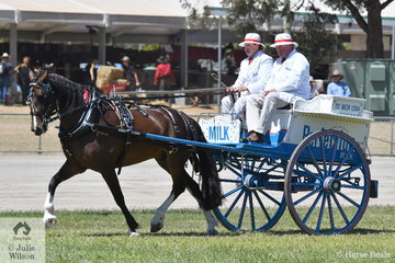 The Ward Family from Gosford in NSW claimed the Business Delivery Championship with their, 'Dancer'. Denise Ward is at the reins with Paul Ward making the milk run.