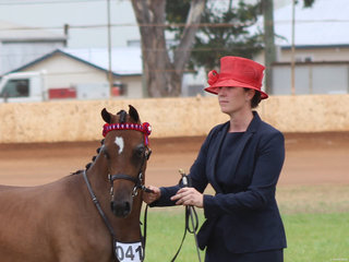 Champion Led Arabian Riding Pony McArthurparc Miss Dior shown by Madeline Jeff