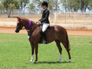 Champion Novice Derivative Lee Arnes Magestic Rose owned by Janine Woodall and ridden by Charlee Anthony