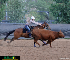 Chasing the beast in the Ladies Campdraft was Homecreek Ivan with Rowena Dillon in the saddle..